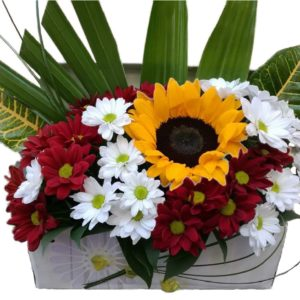 cvjece-u-kutiji
